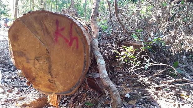 cambodia-vireak-chey-logging.jpg