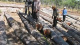 cambodia-rattanakiri-logs-305.jpg