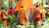 cambodia-monks-save-tree.jpg