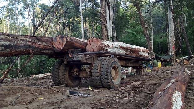 cambodia-ratanakkiri-illegal-logging-crop.jpg