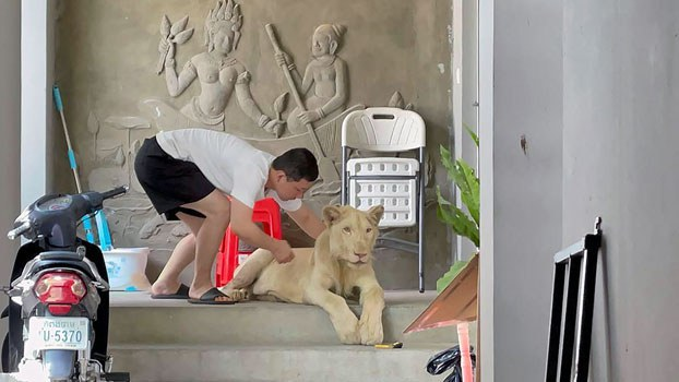 cambodia-pet-lion-confiscated-june27-2021.jpg