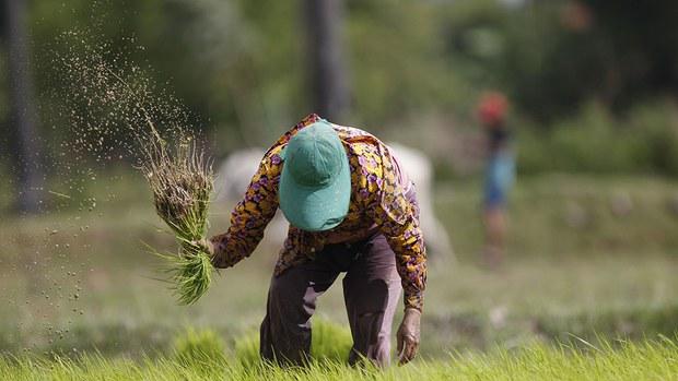 cambodia-rice-farmer-june-2018.jpg