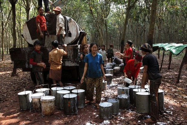 cambodia-harvesting-rubber-jan-2012.jpg