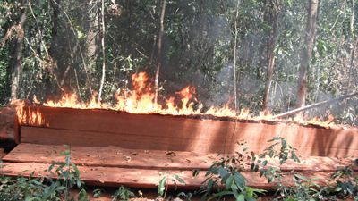 Activists burn illegal timber seized during their five-day journey through the Prey Lang forests.