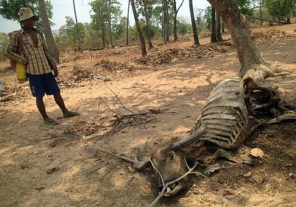 cambodia-dead-buffalo-siem-pang-district-apr23-2016.jpg