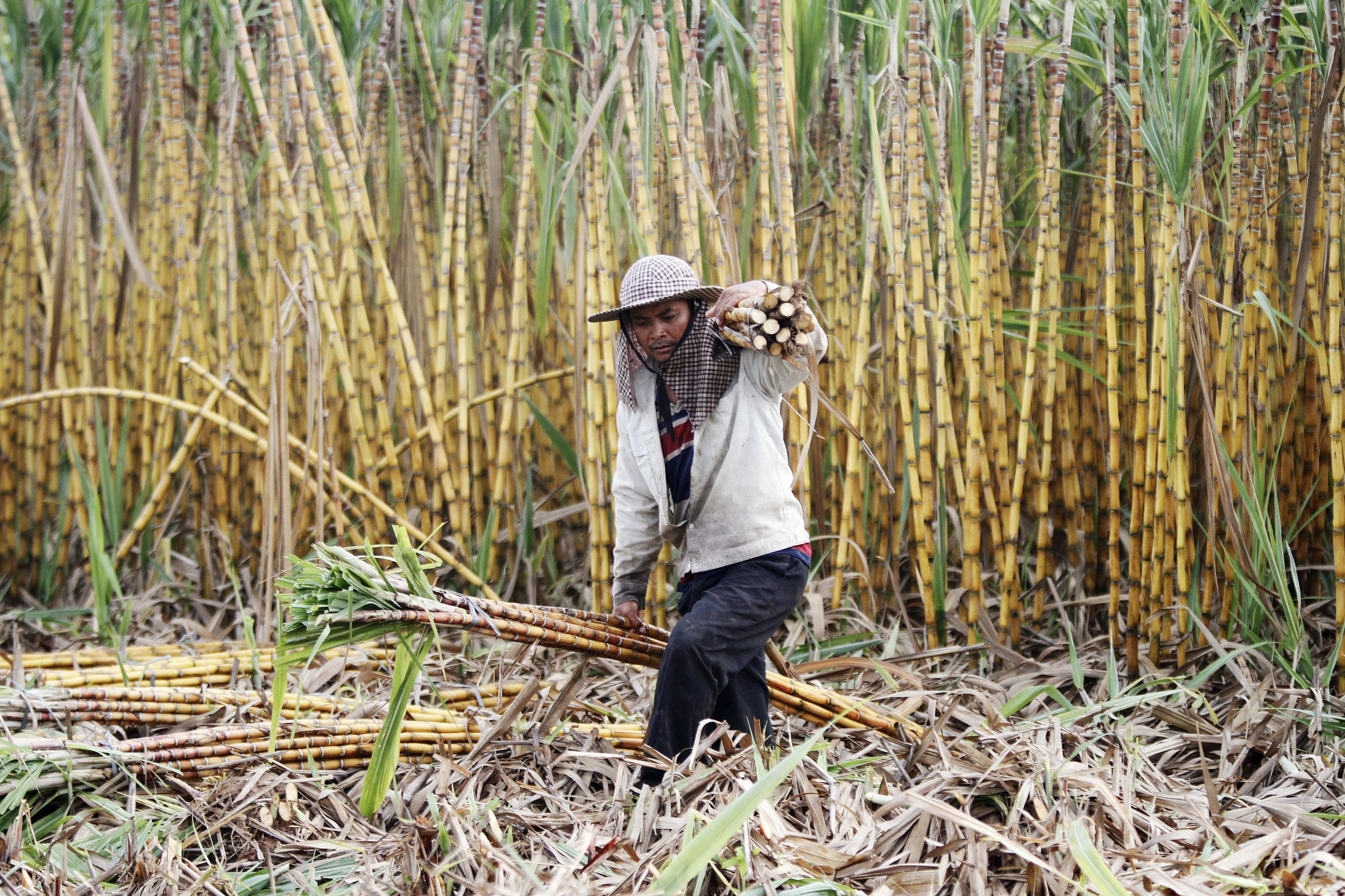 Chinese Sugar Company Leases Parts of Cambodian Land Concession to Farmers
