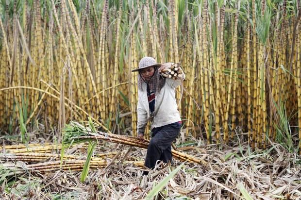 cambodia-sugar-plantation