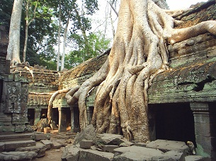 Tree roots grow over the west corridor of Ta Phrom in Siem Reap.