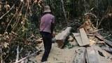 khmer-forestlogger-oct132015.jpg