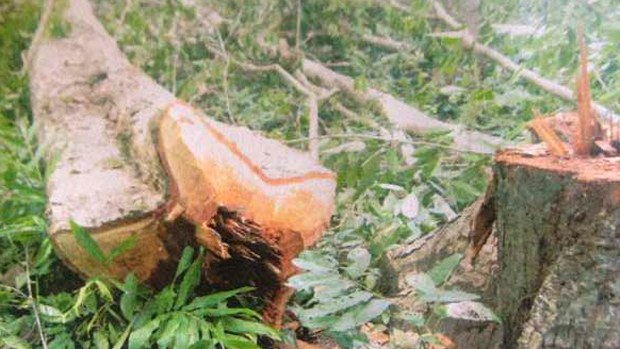 cambodia-lower-sesan-timber-nov-2014-crop.jpg
