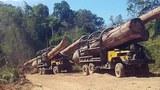 Trucks transport timber from Virachey National Park in northeastern Cambodia's Ratanakiri province, Feb. 2017.