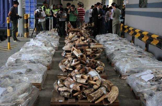 Campaigner: China's Ivory Ban Extension Riddled With Loopholes