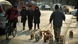 china-dogs-dec-2012.jpg