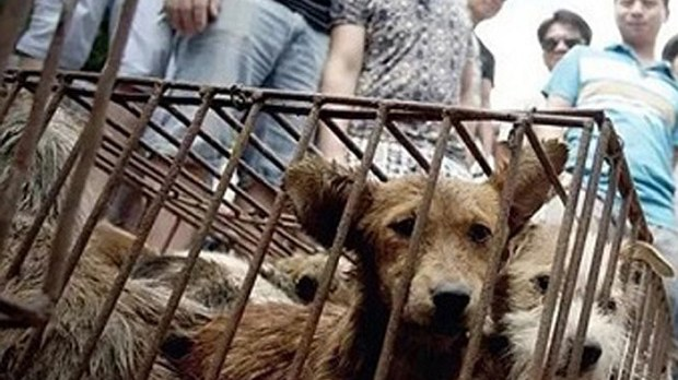 china-dog-meat-festival-crop.jpg
