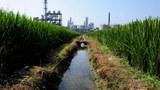 jiangsu-checmical-plant-305.jpg