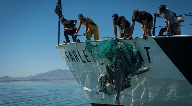 Fish Populations Plummet Amid Demand For Swim Bladders