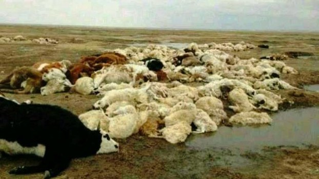 Predatory mining of minerals in the Xilin Gol area of Inner Mongolia has caused pollution that has created desperate situation for local herdsmen.