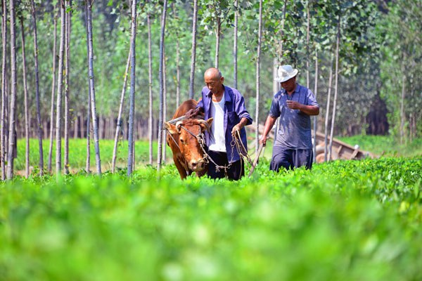 china-farmers-harvest-peanuts-shandong-sept7-2016.jpg