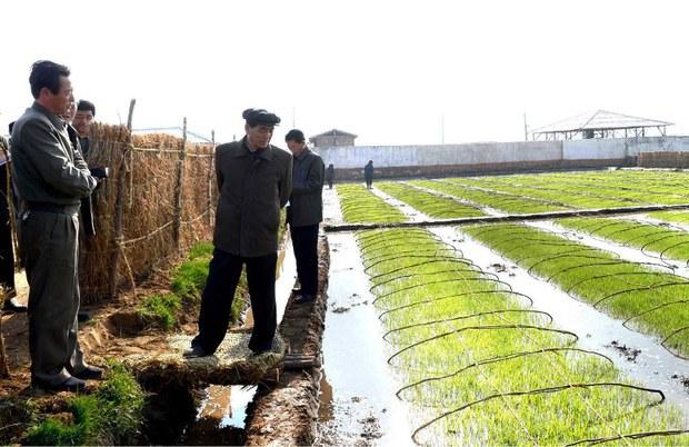 nk-farm-april-2013.jpg
