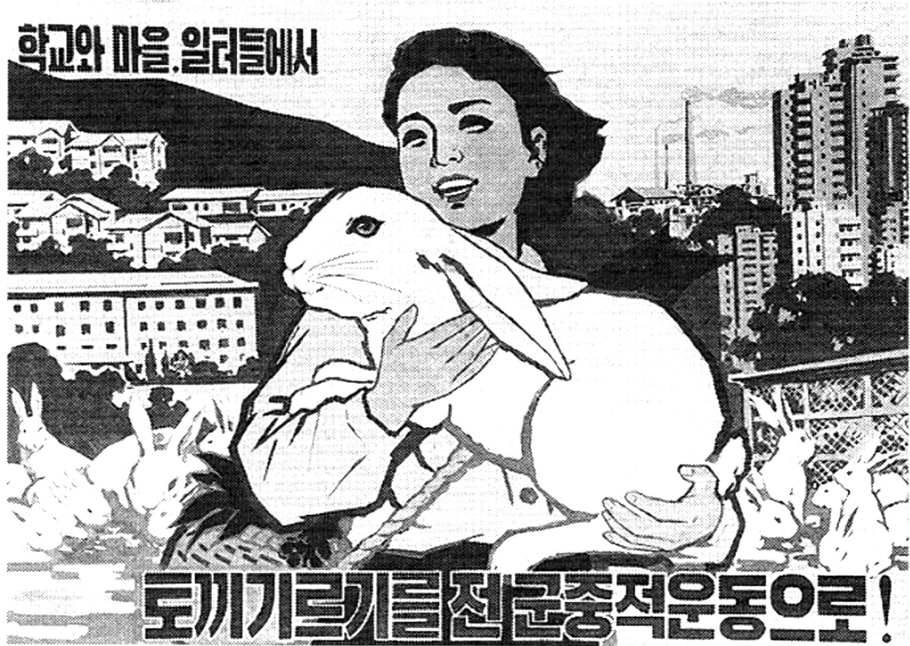 nk-rabbit