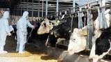 nkorea-livestock-305.jpg