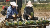 Grain-Short North Korea Forces Housewives to 'Volunteer' for Farm Work
