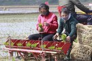 North Korea's Food Production Down Five Percent in 2020