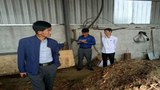 nk-china-pig-feed-asf-2019-crop
