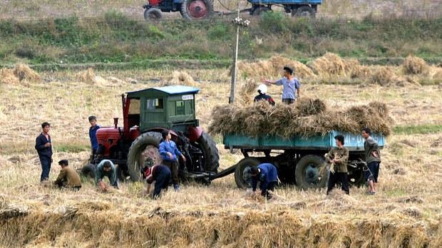 nk-farming-grains-crop.jpg