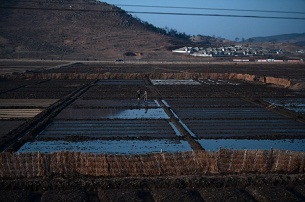 Women work on a rice paddy alongside the railway line from Pyongyang to North Pyongan province, April 8, 2012.