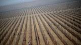 nk-apple-farm-april-2012.jpg