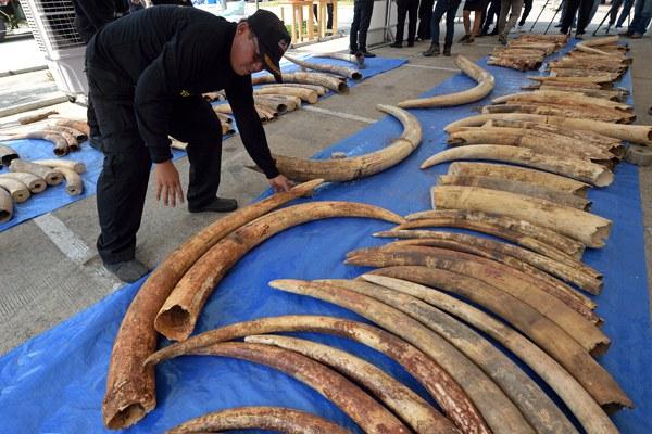 thailand-smuggled-ivory-for-laos-apr27-2015.jpg
