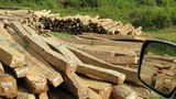 Illegal-Logging-1-305.jpg