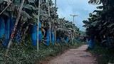 laos-bananafarm3-053018.jpg