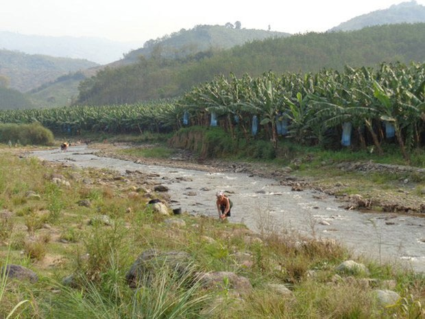 Chinese Banana Plantations Lose their Appeal in Laos as Pollution Concerns Grow