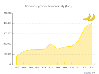 Banana production in Laos 2002-2013. RFA graphic