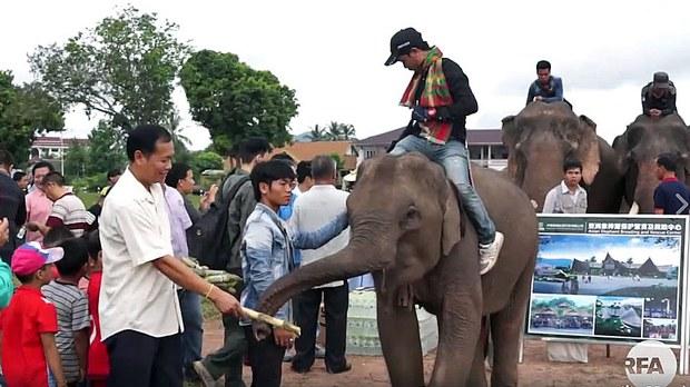 laos-world-elephant-day-sayaboury-province-aug12-2017.jpg