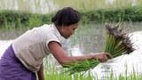 Lao-Rice-Farmer-305.jpg