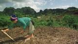 laos-maize-farmer-1997.jpg