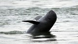 laos-dolphin-043018.jpg