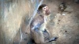 monkeyfarms-305.jpg
