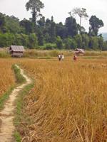 Lao village. Photo: Simon Gurney