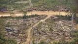 laos-logging-march-2010.jpg
