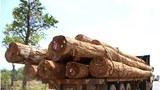 laos-logging-truck-attapeu-may-2015.jpg