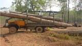laos-logging-vietnam-border-2014-crop.jpg