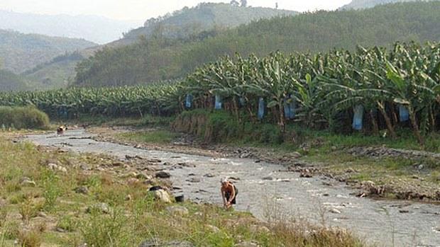 laos-bananafarm2-030519.jpg