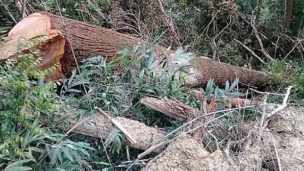 laos-logs2-062918.jpg