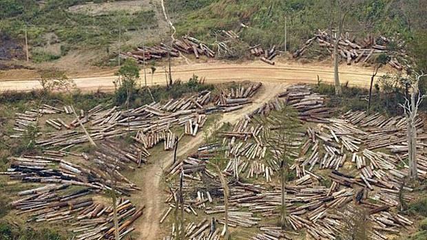 laos-logging-011017.jpg