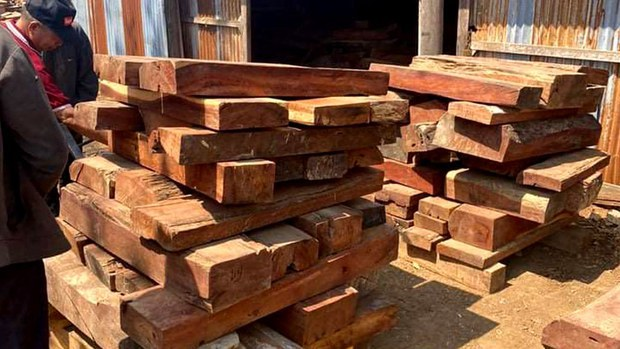 Illegally Harvested Timber Sold 'Under Cover' in Attapeu Province in Laos