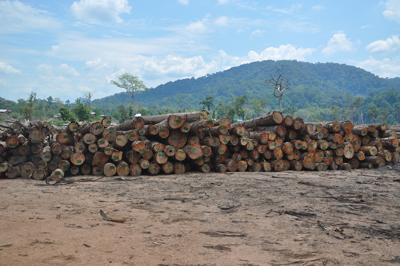 Logs in a field in Attapeu province, Laos, await export to Vietnam in an undated photo. (Photo courtesy of an RFA listener.)